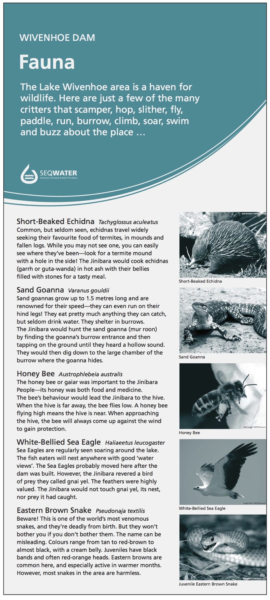 Wivenhoe Dam interpretive signage - Fauna