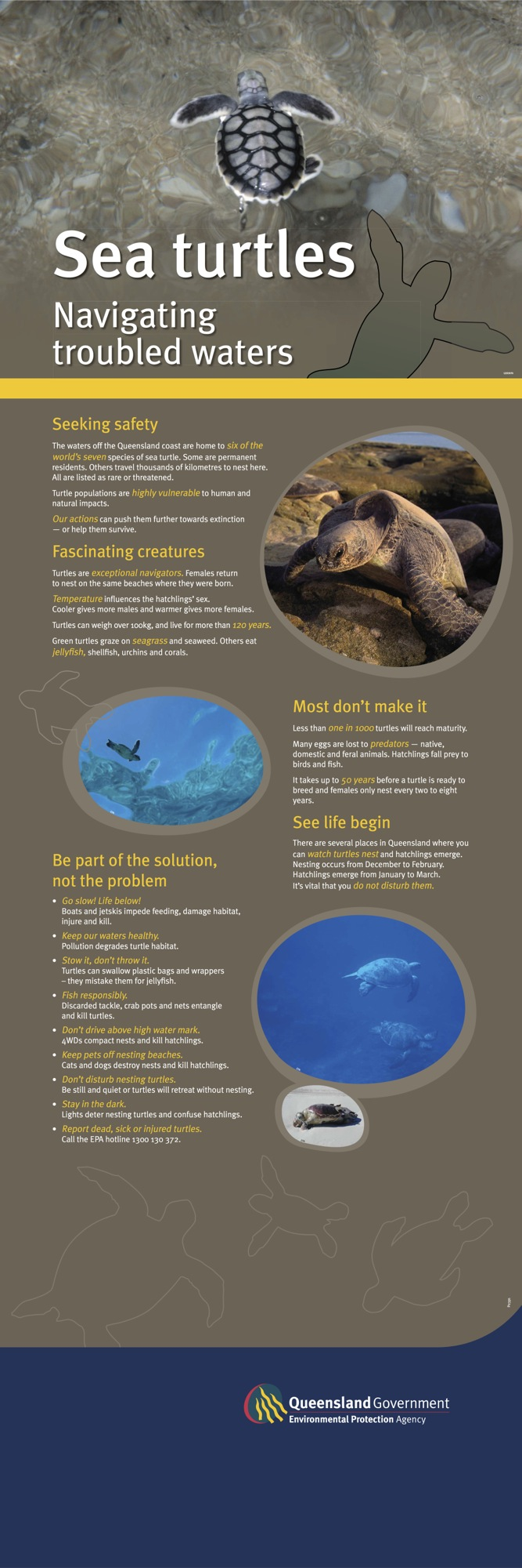 QPWS sea turtles banner